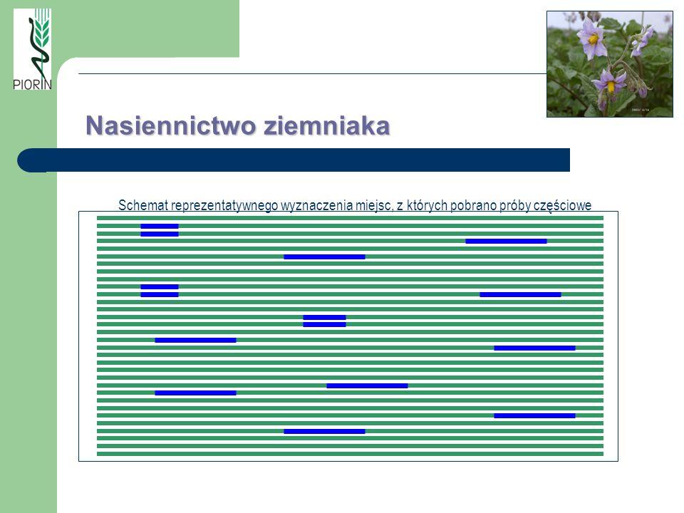Schemat reprezentatywnego wyznaczenia miejsc, z których pobrano próby częściowe Nasiennictwo ziemniaka