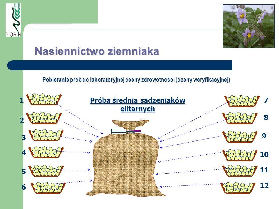 7 8 9 10 11 12 Próba średnia sadzeniaków elitarnych 1 2 3 4 5 6 Nasiennictwo ziemniaka Pobieranie prób do laboratoryjnej oceny zdrowotności (oceny wer