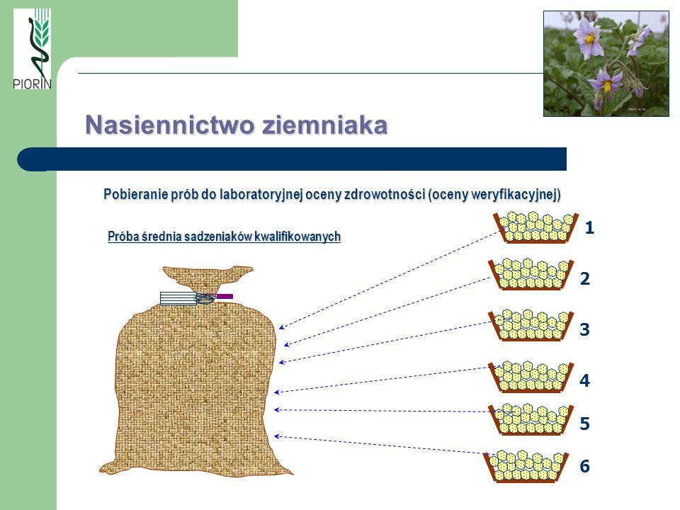 Próba średnia sadzeniaków kwalifikowanych 1 2 3 4 5 6 Nasiennictwo ziemniaka Pobieranie prób do laboratoryjnej oceny zdrowotności (oceny weryfikacyjne