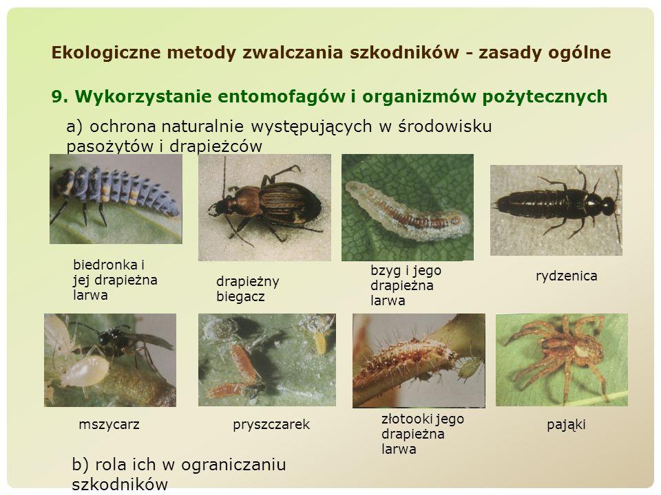 Ekologiczne metody zwalczania szkodników - zasady ogólne 9. Wykorzystanie entomofagów i organizmów pożytecznych a) ochrona naturalnie występujących w