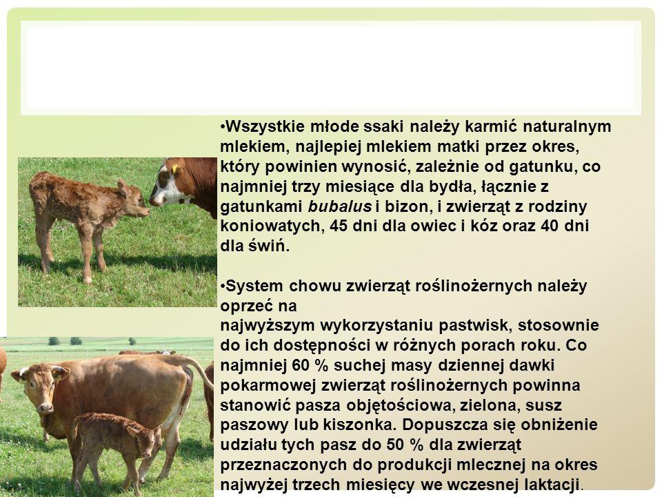 Wszystkie młode ssaki należy karmić naturalnym mlekiem, najlepiej mlekiem matki przez okres, który powinien wynosić, zależnie od gatunku, co najmniej