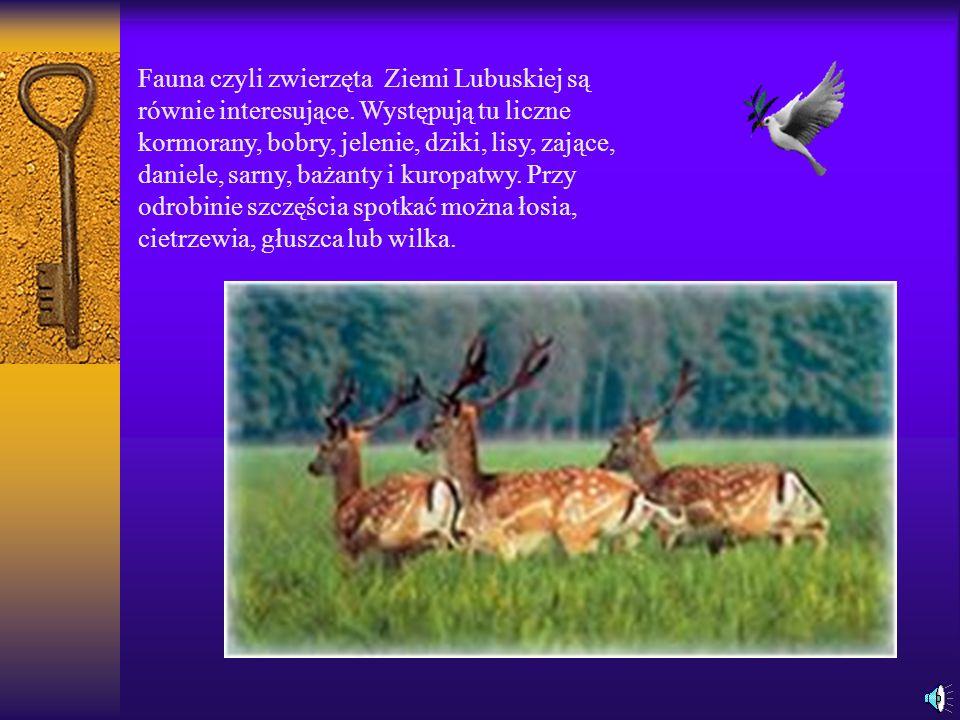 Fauna czyli zwierzęta Ziemi Lubuskiej są równie interesujące.