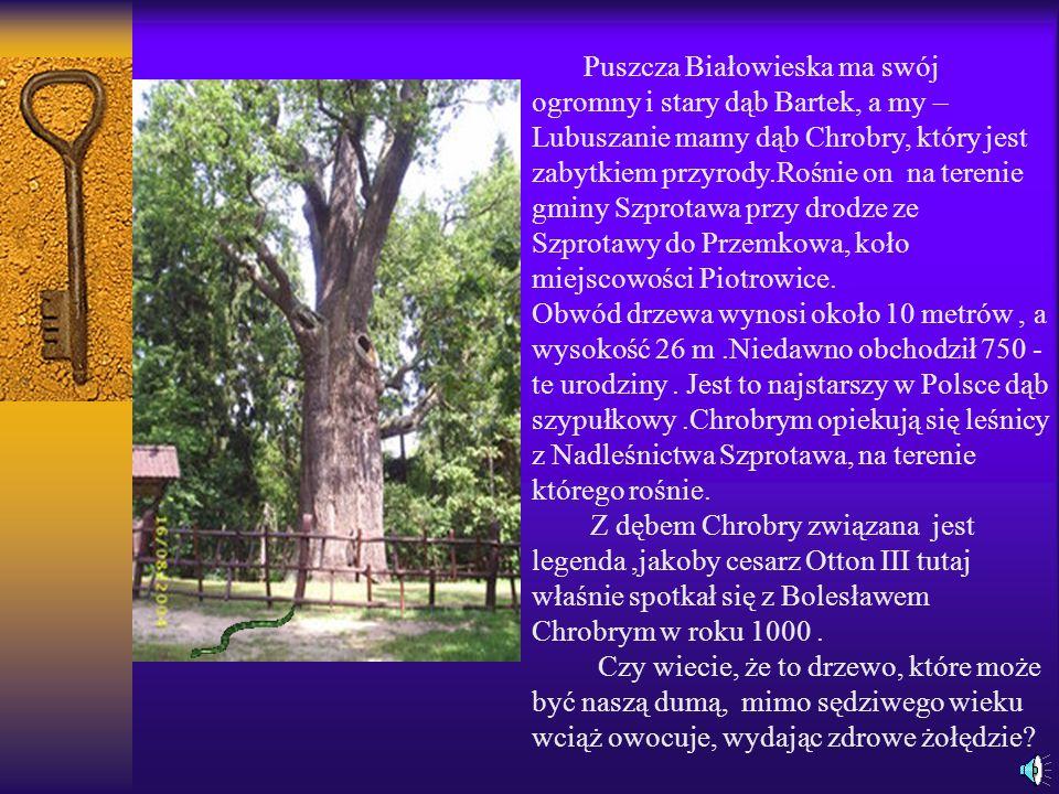 Wieża Bramy Żarskiej, czyli znana mieszkańcom Lubska-Baszta Pachołków Miejskich to najstarsza budowla, która zachowała się bez zmian do dzisiaj.