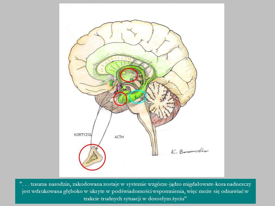 Zwiększone ryzyko zachorowań u dzieci po cc astma alergia cukrzyca zapalenie błon śluzowych żołądka i jelit białaczka nowotwór jąder Kaye i wsp.1991; Cnattingius i wsp.