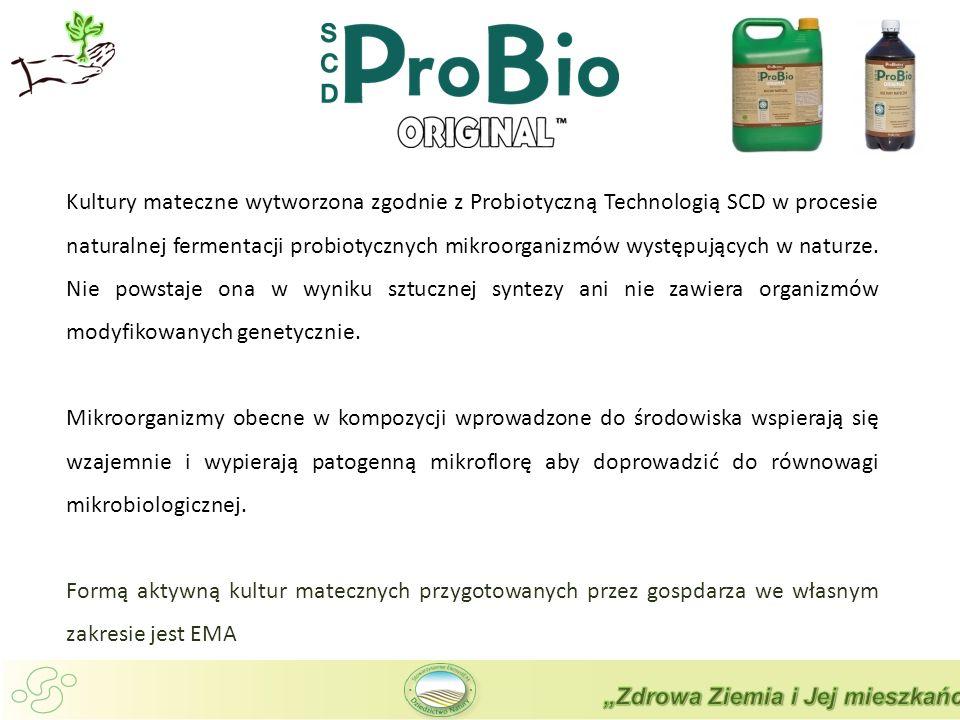 Kultury mateczne wytworzona zgodnie z Probiotyczną Technologią SCD w procesie naturalnej fermentacji probiotycznych mikroorganizmów występujących w naturze.