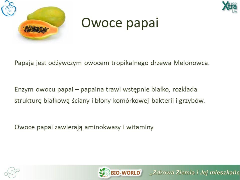 Papaja jest odżywczym owocem tropikalnego drzewa Melonowca.