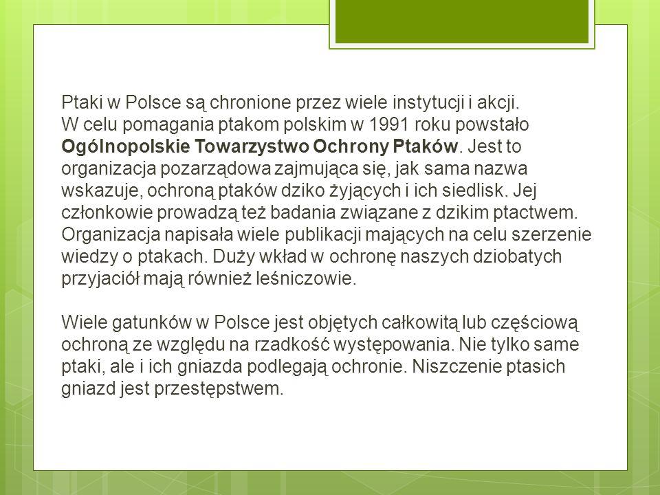 Ptaki w Polsce są chronione przez wiele instytucji i akcji. W celu pomagania ptakom polskim w 1991 roku powstało Ogólnopolskie Towarzystwo Ochrony Pta