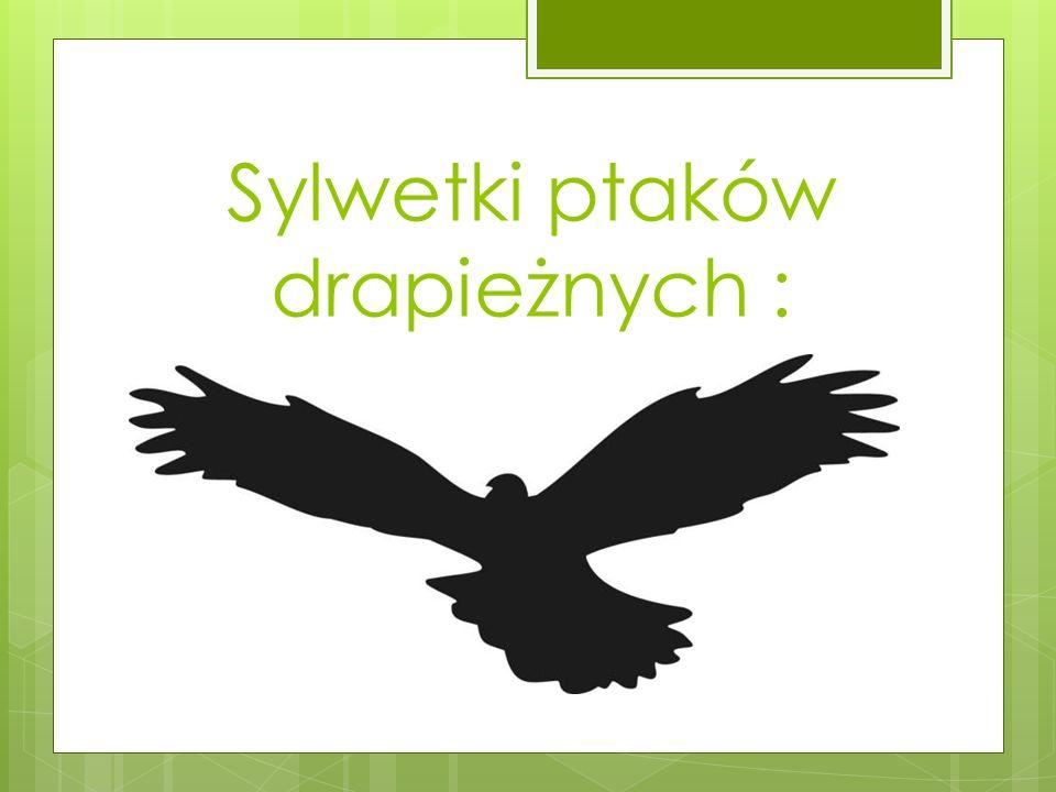 Sylwetki ptaków drapieżnych :