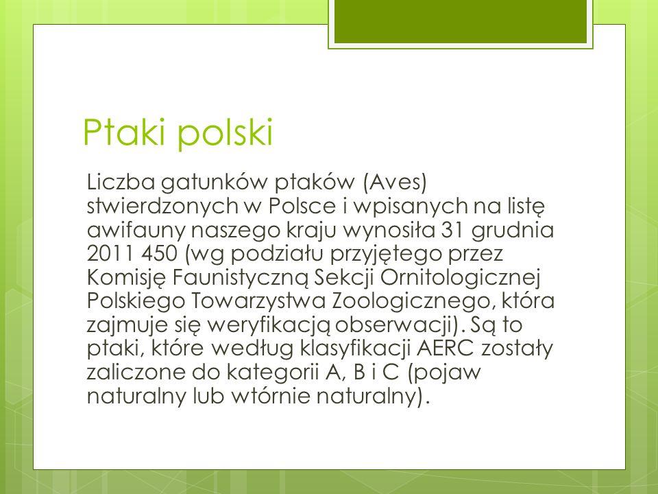 Ptaki polski Liczba gatunków ptaków (Aves) stwierdzonych w Polsce i wpisanych na listę awifauny naszego kraju wynosiła 31 grudnia 2011 450 (wg podział