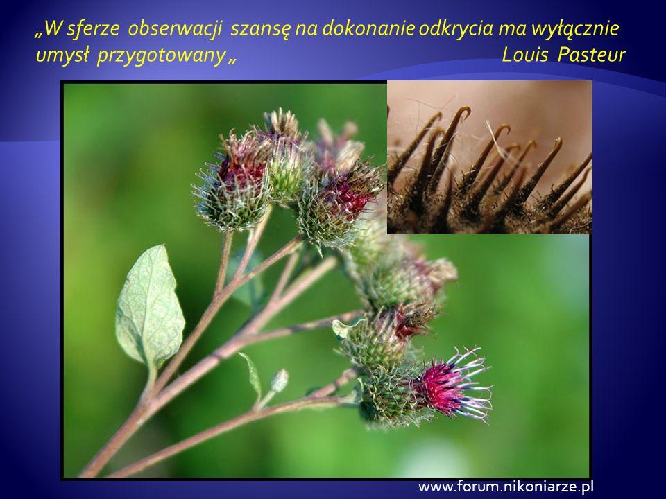 www.forum.nikoniarze.pl W sferze obserwacji szansę na dokonanie odkrycia ma wyłącznie umysł przygotowany Louis Pasteur