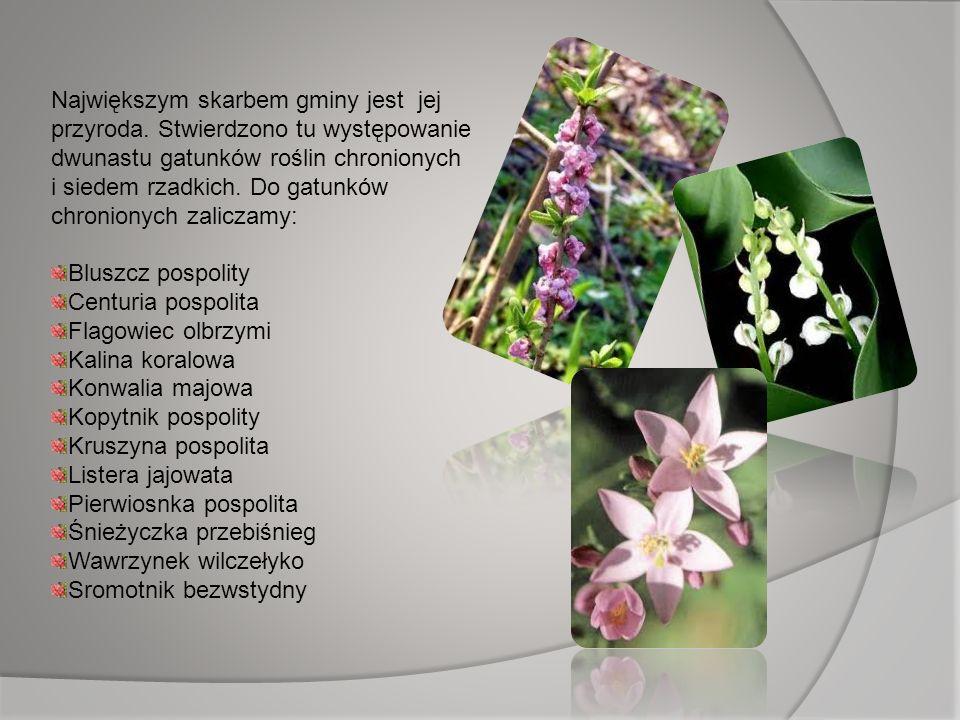 Największym skarbem gminy jest jej przyroda. Stwierdzono tu występowanie dwunastu gatunków roślin chronionych i siedem rzadkich. Do gatunków chroniony