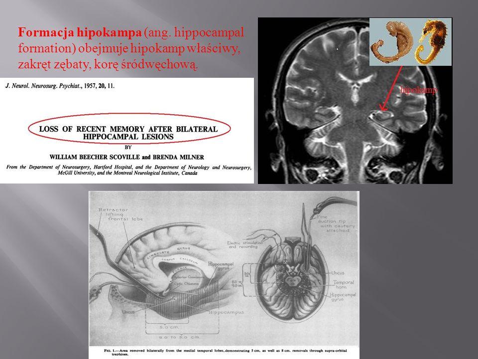 Formacja hipokampa (ang. hippocampal formation) obejmuje hipokamp właściwy, zakręt zębaty, korę śródwęchową.