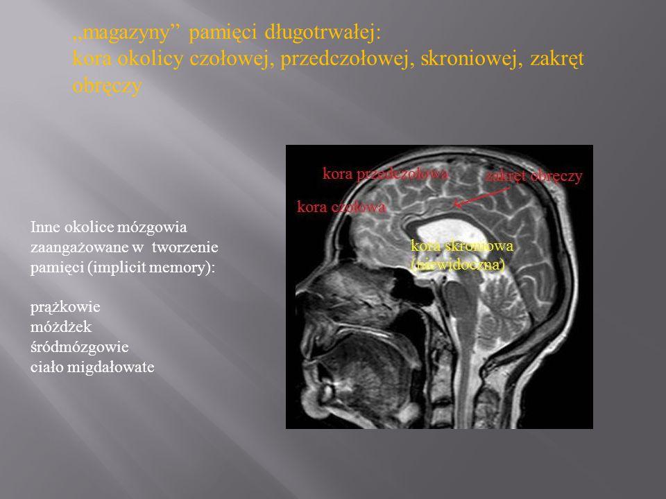 magazyny pamięci długotrwałej: kora okolicy czołowej, przedczołowej, skroniowej, zakręt obręczy Inne okolice mózgowia zaangażowane w tworzenie pamięci