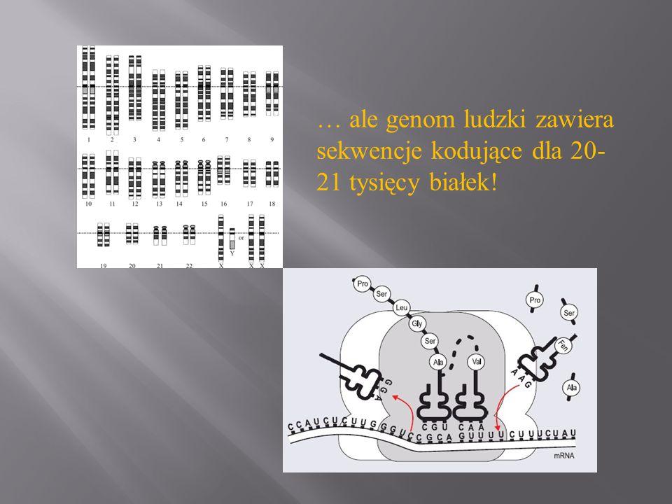 … ale genom ludzki zawiera sekwencje kodujące dla 20- 21 tysięcy białek!