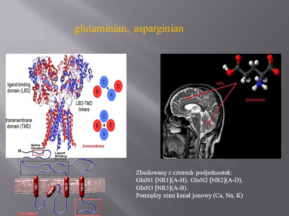 glutaminian, asparginian Zbudowany z czterech podjednostek: GluN1 [NR1](A-H), GluN2 [NR2](A-D), GluN3 [NR3](A-B). Pomiędzy nimi kanał jonowy (Ca, Na,