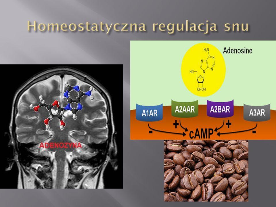 NREM (non-rapid eye movement) : REM (rapid eye movement) 4:1, oraz 4-5 cykli w trakcie snu( cykl około 90 min).