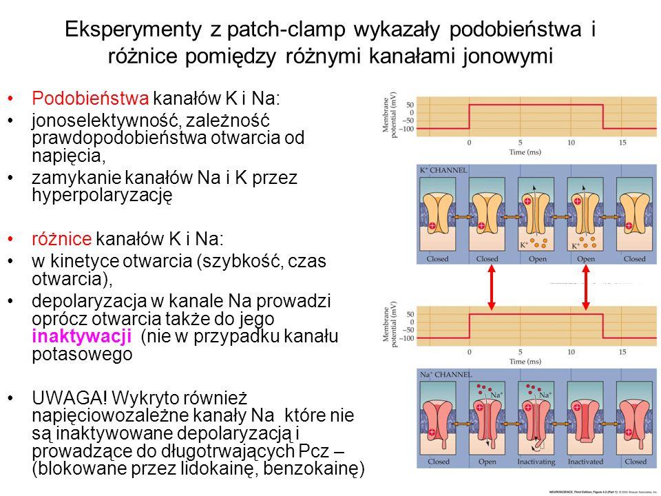 Eksperymenty z patch-clamp wykazały podobieństwa i różnice pomiędzy różnymi kanałami jonowymi Podobieństwa kanałów K i Na: jonoselektywność, zależność prawdopodobieństwa otwarcia od napięcia, zamykanie kanałów Na i K przez hyperpolaryzację różnice kanałów K i Na: w kinetyce otwarcia (szybkość, czas otwarcia), depolaryzacja w kanale Na prowadzi oprócz otwarcia także do jego inaktywacji (nie w przypadku kanału potasowego UWAGA.
