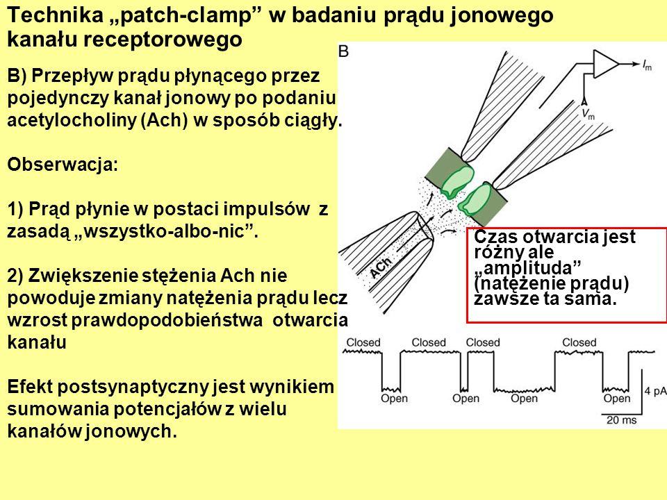 Technika patch-clamp w badaniu prądu jonowego kanału receptorowego Czas otwarcia jest różny ale amplituda (natężenie prądu) zawsze ta sama.