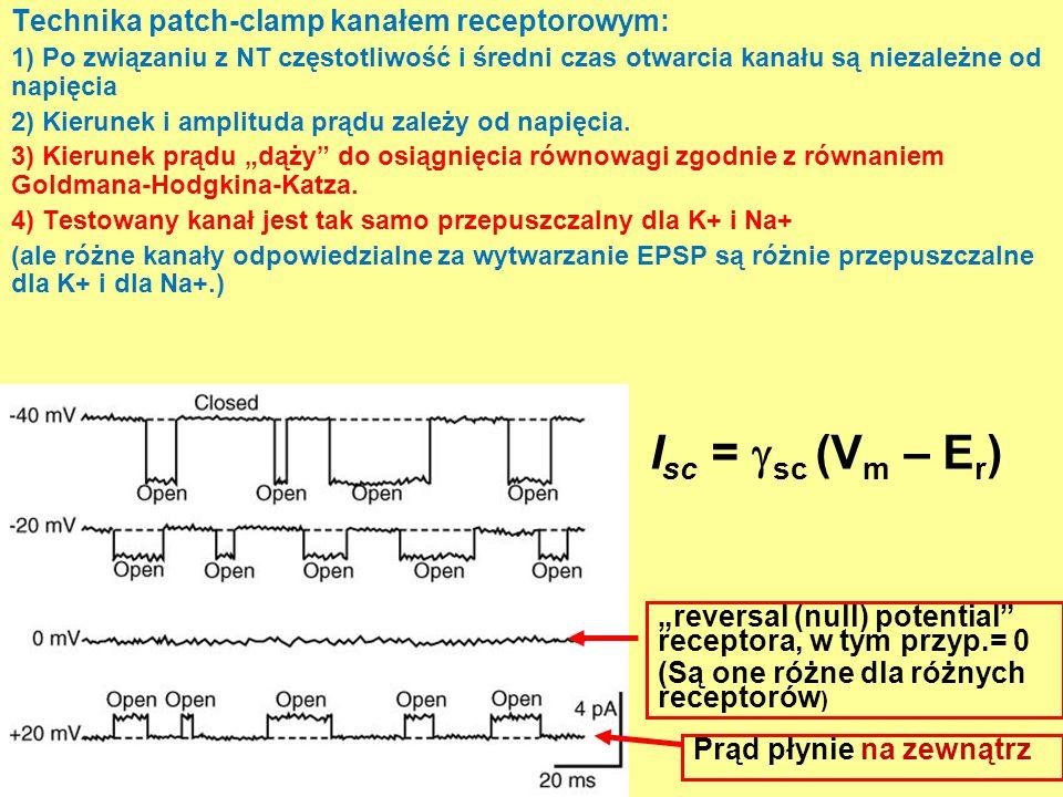 Technika patch-clamp kanałem receptorowym: 1) Po związaniu z NT częstotliwość i średni czas otwarcia kanału są niezależne od napięcia 2) Kierunek i amplituda prądu zależy od napięcia.