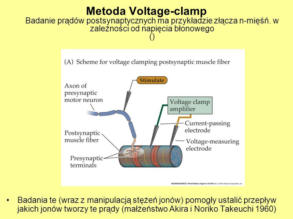 Metoda Voltage-clamp Badanie prądów postsynaptycznych ma przykładzie złącza n-mięśń.