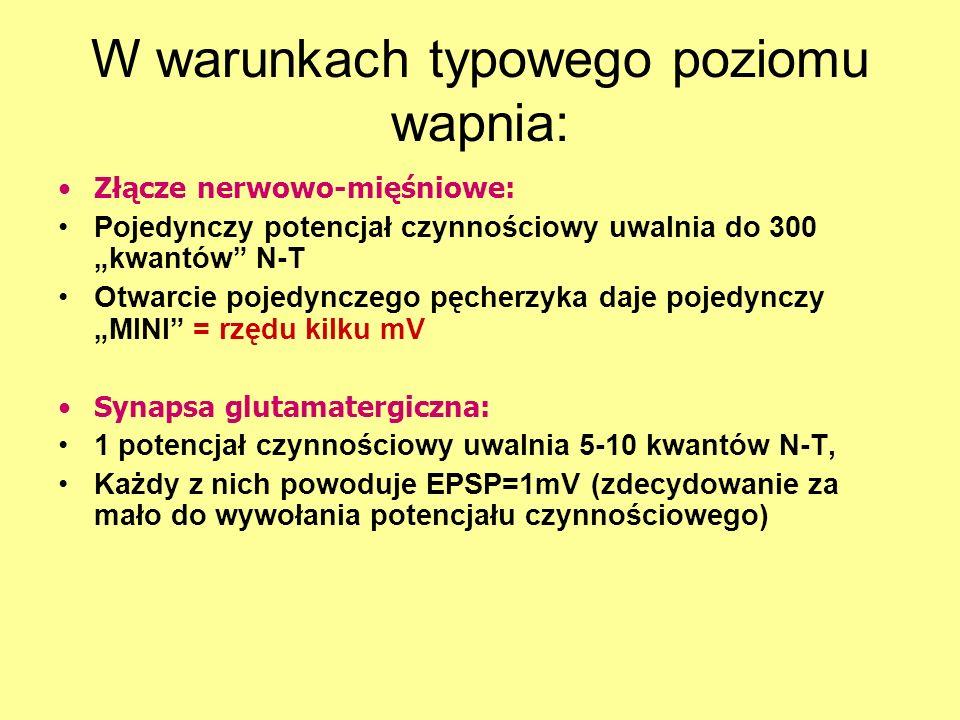 W warunkach typowego poziomu wapnia: Złącze nerwowo-mięśniowe: Pojedynczy potencjał czynnościowy uwalnia do 300 kwantów N-T Otwarcie pojedynczego pęcherzyka daje pojedynczy MINI = rzędu kilku mV Synapsa glutamatergiczna: 1 potencjał czynnościowy uwalnia 5-10 kwantów N-T, Każdy z nich powoduje EPSP=1mV (zdecydowanie za mało do wywołania potencjału czynnościowego)