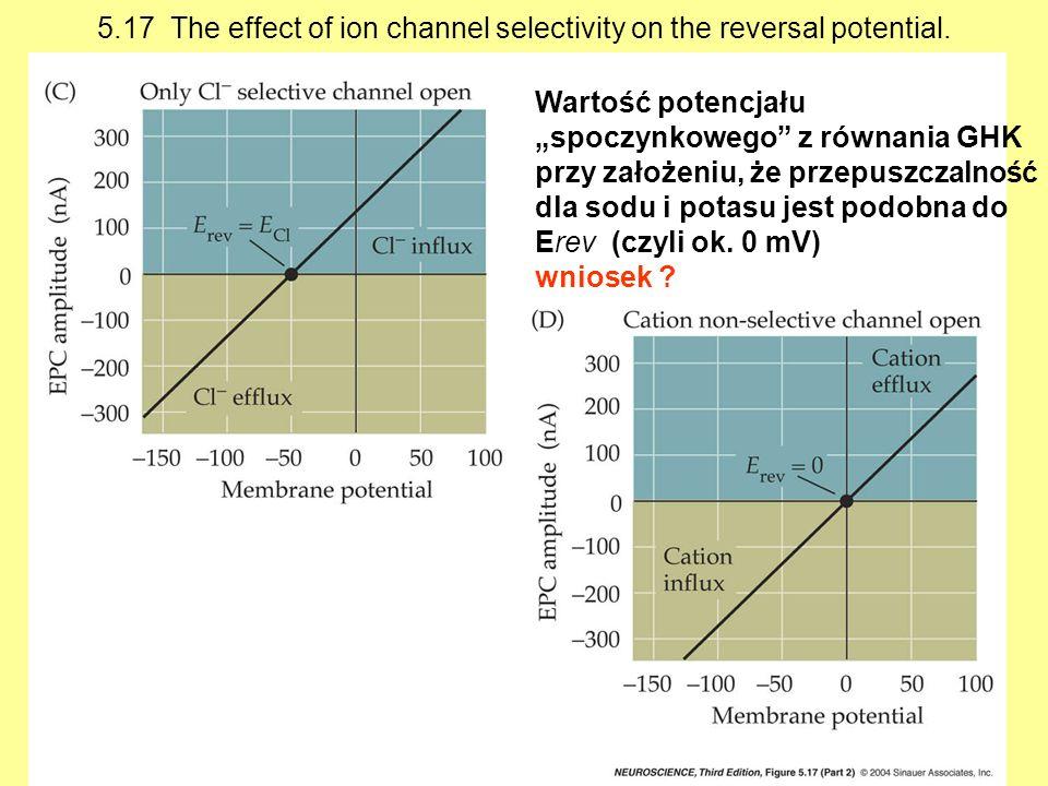 Wartość potencjału spoczynkowego z równania GHK przy założeniu, że przepuszczalność dla sodu i potasu jest podobna do Erev (czyli ok.