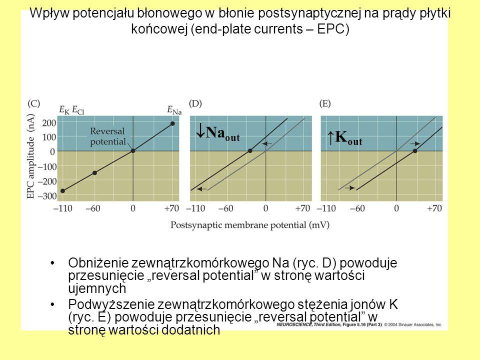 Wpływ potencjału błonowego w błonie postsynaptycznej na prądy płytki końcowej (end-plate currents – EPC) Obniżenie zewnątrzkomórkowego Na (ryc.