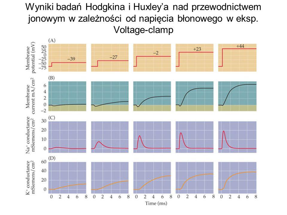 Wyniki badań Hodgkina i Huxleya nad przewodnictwem jonowym w zależności od napięcia błonowego w eksp.