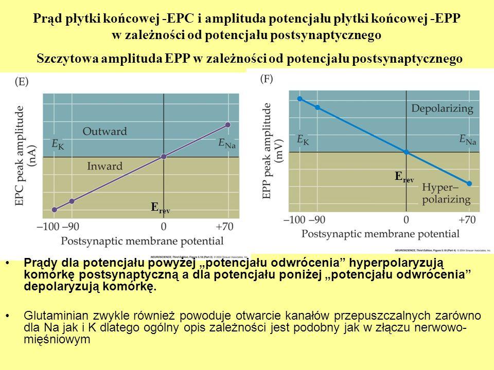Prądy dla potencjału powyżej potencjału odwrócenia hyperpolaryzują komórkę postsynaptyczną a dla potencjału poniżej potencjału odwrócenia depolaryzują komórkę.