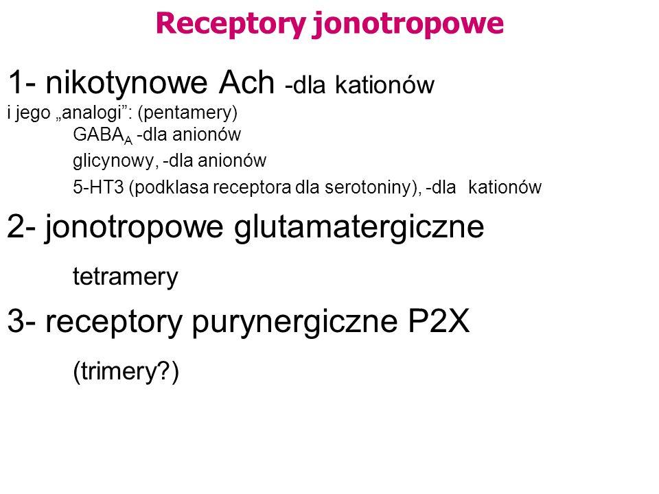 Receptory jonotropowe 1- nikotynowe Ach -dla kationów i jego analogi: (pentamery) GABA A -dla anionów glicynowy, -dla anionów 5-HT3 (podklasa receptora dla serotoniny), -dla kationów 2- jonotropowe glutamatergiczne tetramery 3- receptory purynergiczne P2X (trimery?)