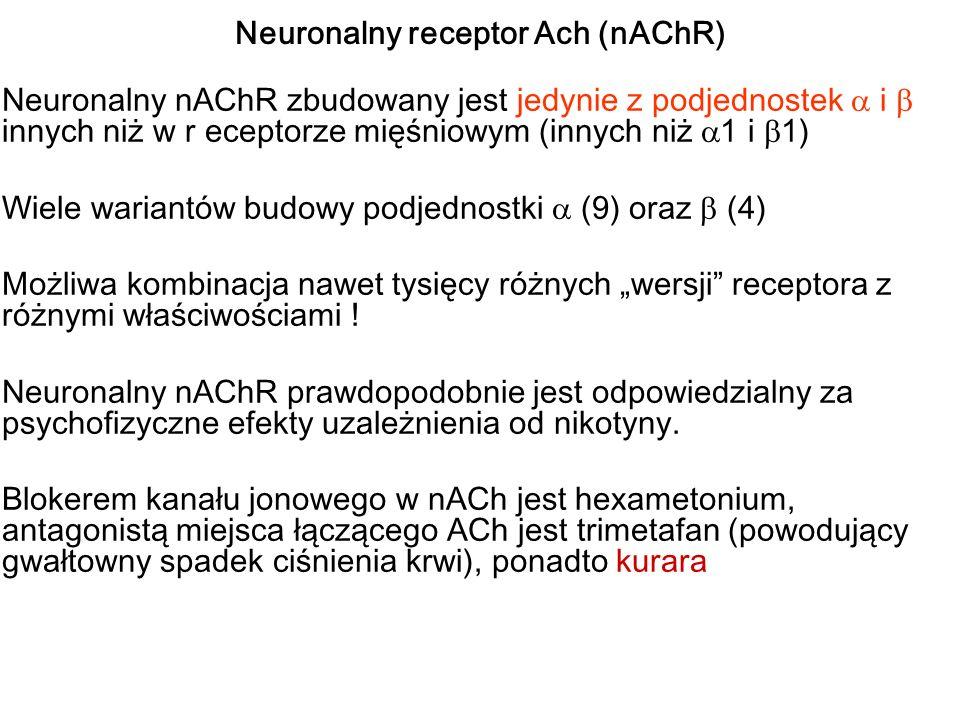 Neuronalny receptor Ach (nAChR) Neuronalny nAChR zbudowany jest jedynie z podjednostek i innych niż w r eceptorze mięśniowym (innych niż 1 i 1) Wiele wariantów budowy podjednostki (9) oraz (4) Możliwa kombinacja nawet tysięcy różnych wersji receptora z różnymi właściwościami .