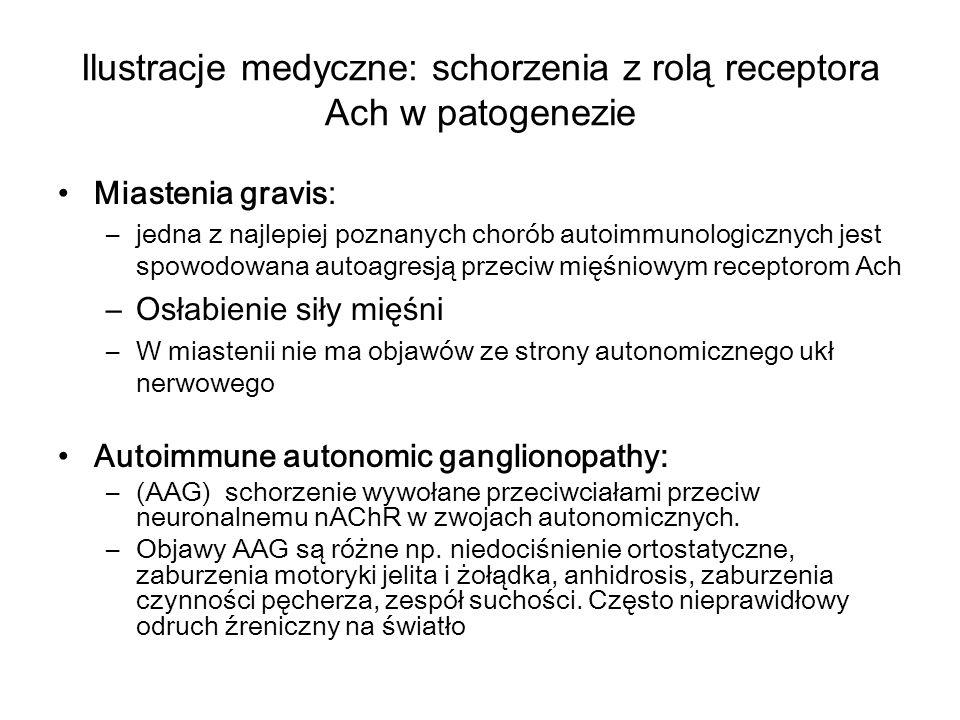 Ilustracje medyczne: schorzenia z rolą receptora Ach w patogenezie Miastenia gravis: –jedna z najlepiej poznanych chorób autoimmunologicznych jest spowodowana autoagresją przeciw mięśniowym receptorom Ach –Osłabienie siły mięśni –W miastenii nie ma objawów ze strony autonomicznego ukł nerwowego Autoimmune autonomic ganglionopathy: –(AAG) schorzenie wywołane przeciwciałami przeciw neuronalnemu nAChR w zwojach autonomicznych.
