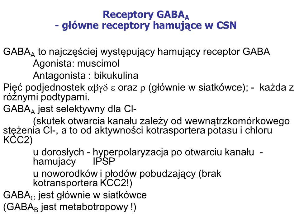 Receptory GABA A - główne receptory hamujące w CSN GABA A to najczęściej występujący hamujący receptor GABA Agonista: muscimol Antagonista : bikukulina Pięć podjednostek oraz (głównie w siatkówce); - każda z różnymi podtypami.