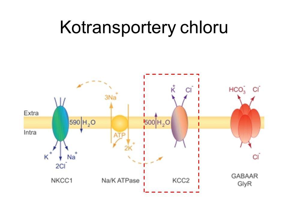 Kotransportery chloru