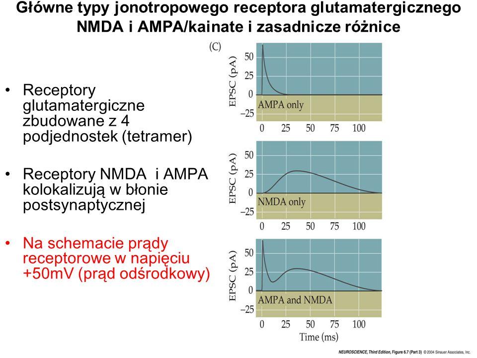 Główne typy jonotropowego receptora glutamatergicznego NMDA i AMPA/kainate i zasadnicze różnice Receptory glutamatergiczne zbudowane z 4 podjednostek (tetramer) Receptory NMDA i AMPA kolokalizują w błonie postsynaptycznej Na schemacie prądy receptorowe w napięciu +50mV (prąd odśrodkowy)