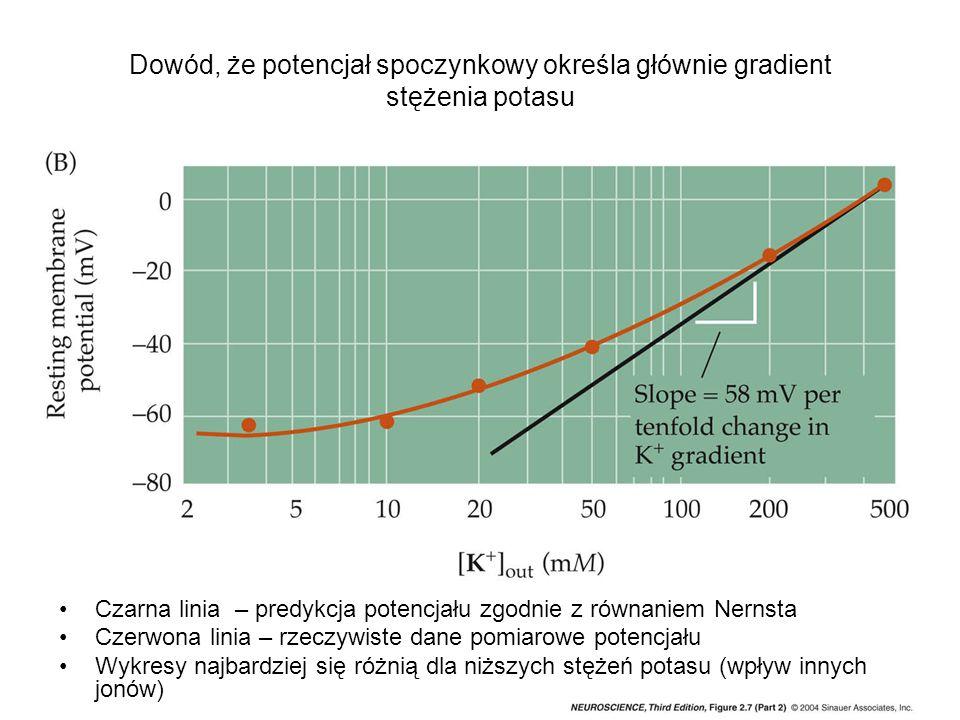 Dowód, że potencjał spoczynkowy określa głównie gradient stężenia potasu Czarna linia – predykcja potencjału zgodnie z równaniem Nernsta Czerwona linia – rzeczywiste dane pomiarowe potencjału Wykresy najbardziej się różnią dla niższych stężeń potasu (wpływ innych jonów)