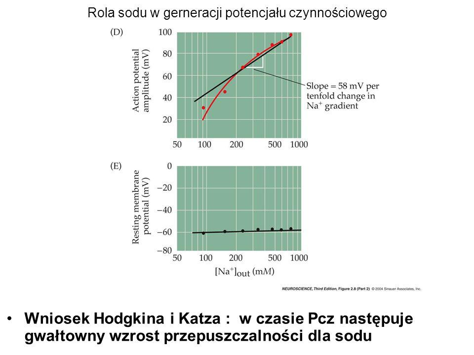 Rola sodu w gerneracji potencjału czynnościowego Wniosek Hodgkina i Katza : w czasie Pcz następuje gwałtowny wzrost przepuszczalności dla sodu