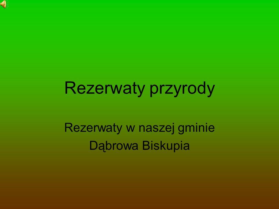 Prezentacja powstała w czasie wycieczki szlakiem rezerwatów znajdujących się na terenie gminy Dąbrowa Biskupia: -w Rejnie, gdzie chroni się głównie wisienkę karłowatą, -w Balczewie, gdzie chroni się ptactwo wodne, przede wszystkim czaplę siwą.