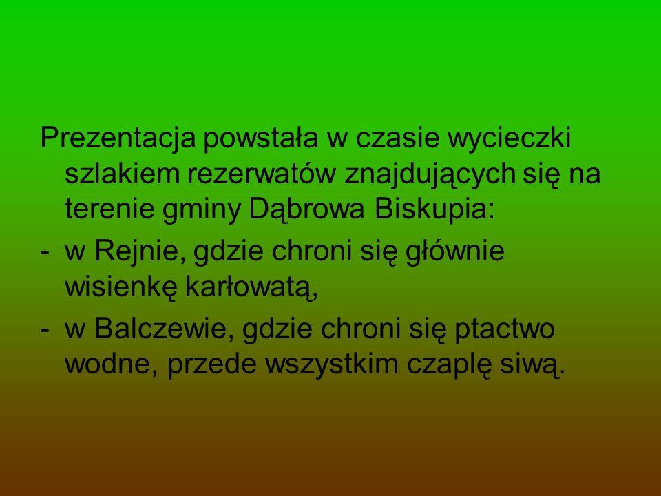 Prezentacja powstała w czasie wycieczki szlakiem rezerwatów znajdujących się na terenie gminy Dąbrowa Biskupia: -w Rejnie, gdzie chroni się głównie wi