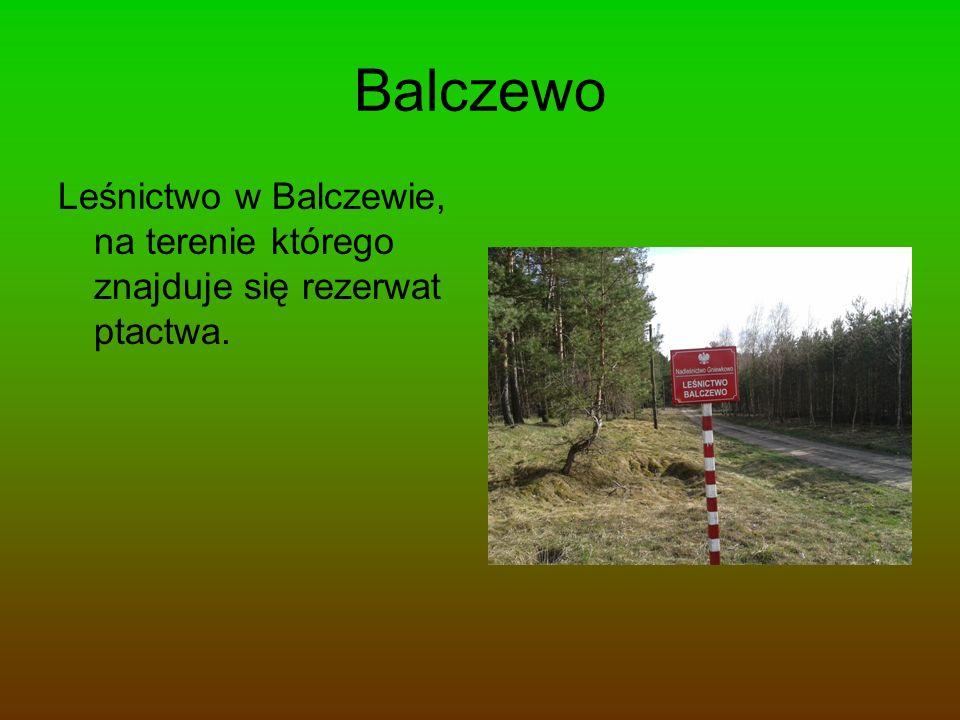 Balczewo Leśnictwo w Balczewie, na terenie którego znajduje się rezerwat ptactwa.
