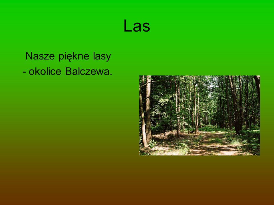 Rezerwat W naszej gminie są dwa rezerwaty w Rejnie i Balczewie, które koniecznie musimy chronić.