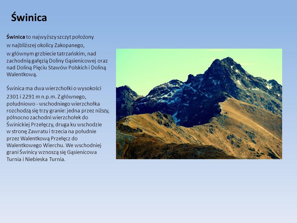 Świnica Świnica to najwyższy szczyt położony w najbliższej okolicy Zakopanego, w głównym grzbiecie tatrzańskim, nad zachodnią gałęzią Doliny Gąsienico