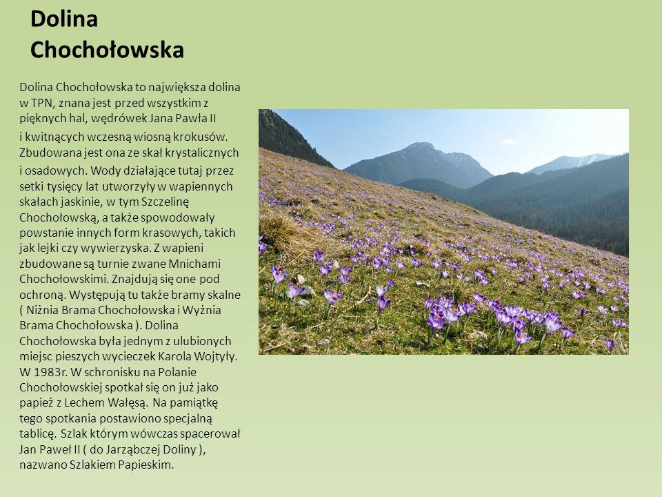 Dolina Chochołowska Dolina Chochołowska to największa dolina w TPN, znana jest przed wszystkim z pięknych hal, wędrówek Jana Pawła II i kwitnących wcz