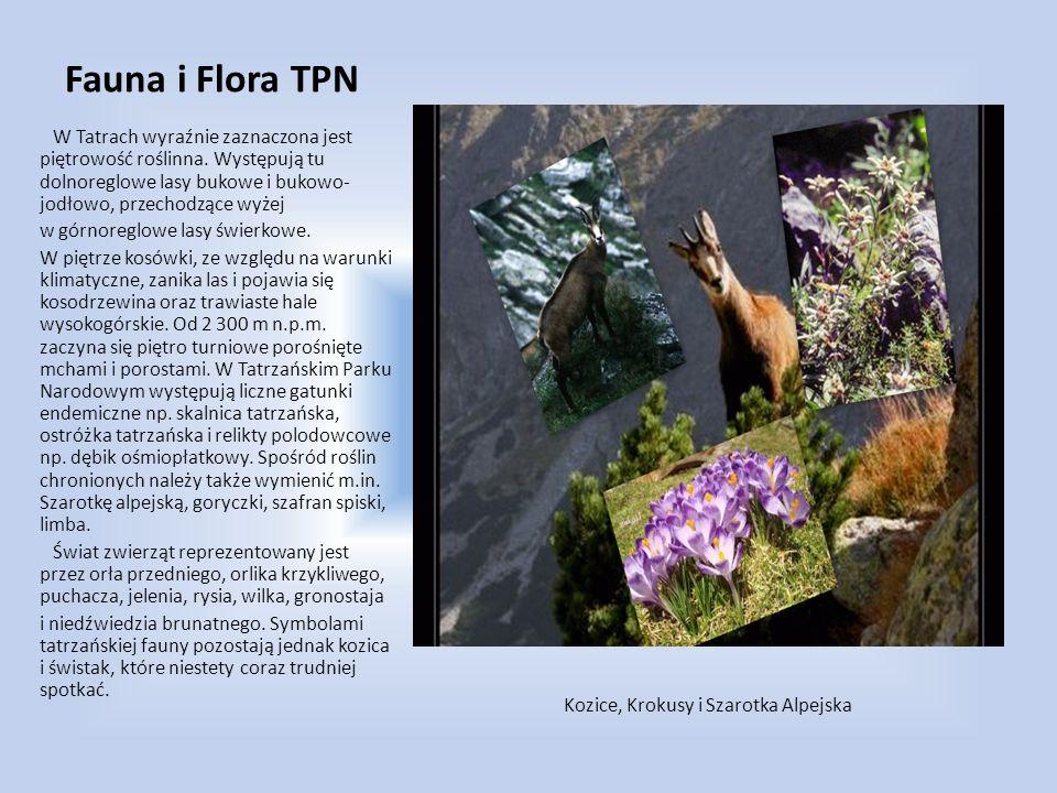 Fauna i Flora TPN W Tatrach wyraźnie zaznaczona jest piętrowość roślinna. Występują tu dolnoreglowe lasy bukowe i bukowo- jodłowo, przechodzące wyżej