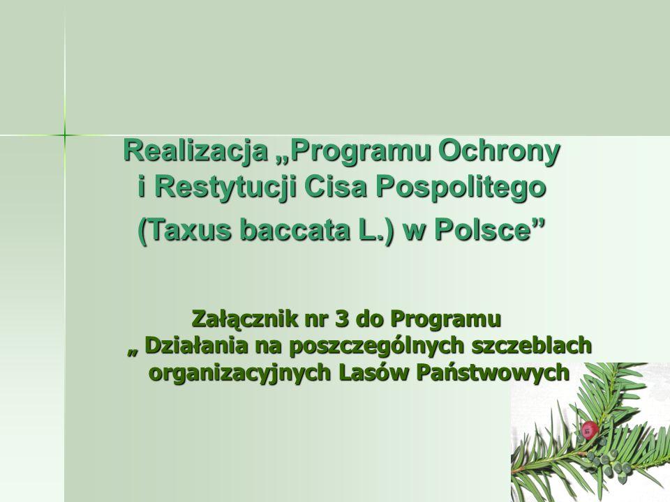 Cisy k.Sierakowa - Nadleśnictwo Lubliniec Cisy k.