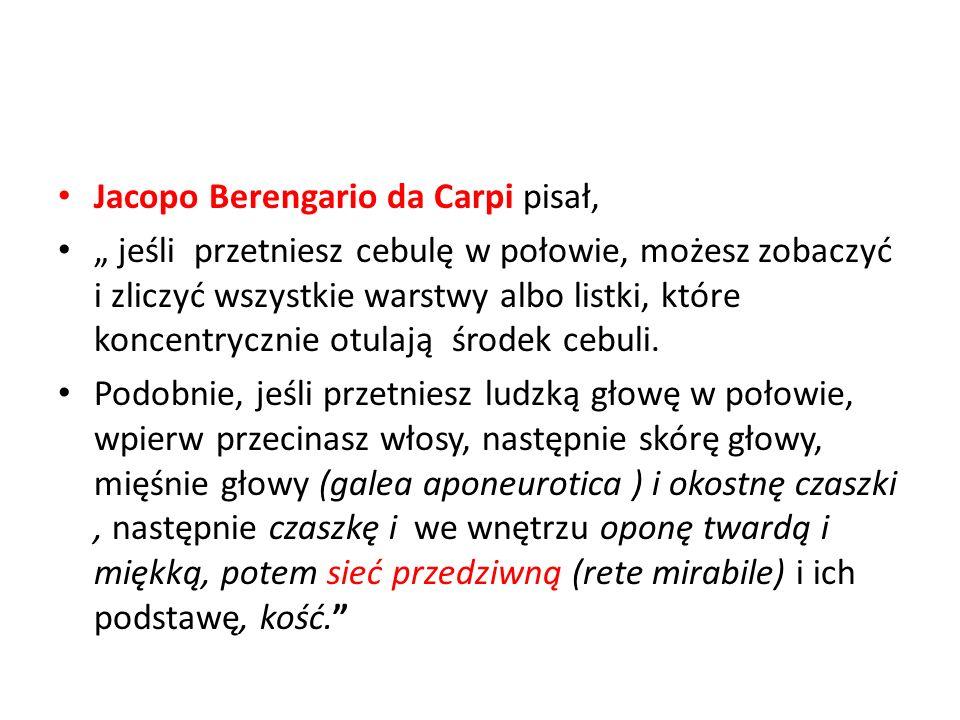 Jacopo Berengario da Carpi pisał, jeśli przetniesz cebulę w połowie, możesz zobaczyć i zliczyć wszystkie warstwy albo listki, które koncentrycznie otu