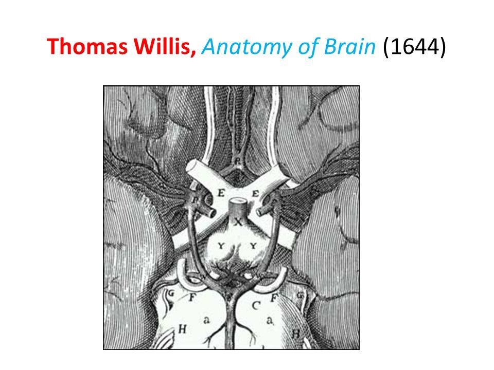 Thomas Willis, Anatomy of Brain (1644)