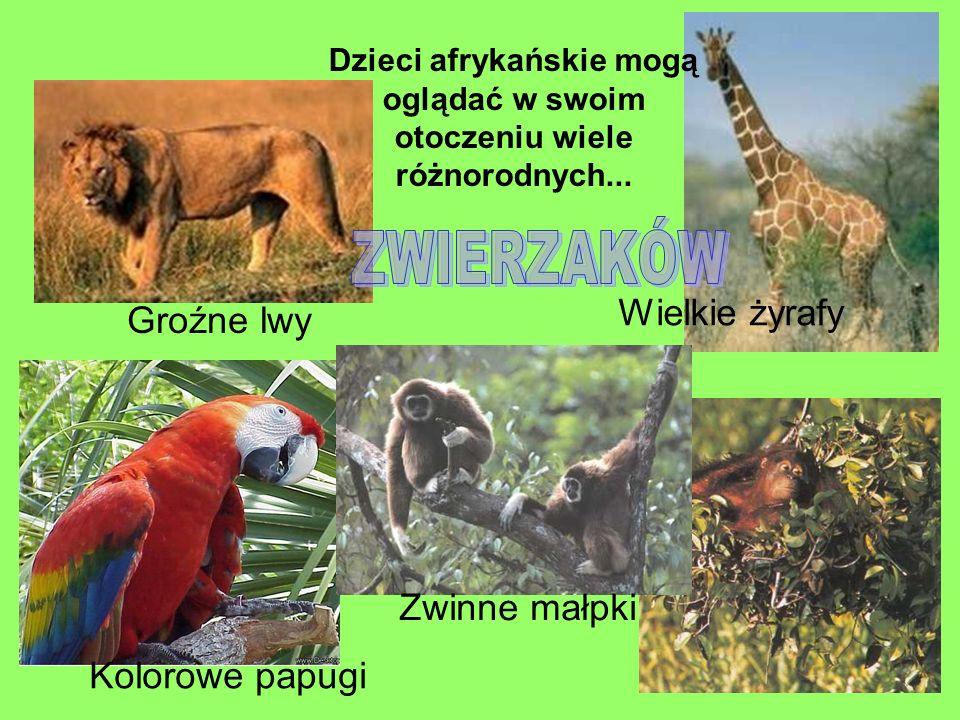 Dzieci afrykańskie mogą oglądać w swoim otoczeniu wiele różnorodnych... Wielkie żyrafy Groźne lwy Kolorowe papugi Zwinne małpki