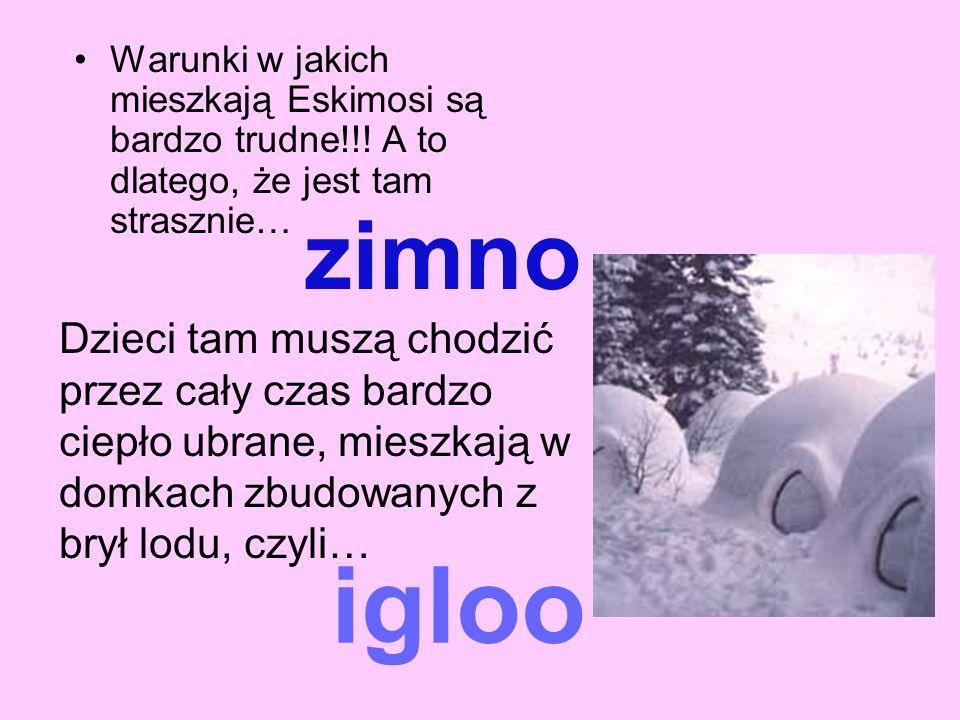 zimno Warunki w jakich mieszkają Eskimosi są bardzo trudne!!! A to dlatego, że jest tam strasznie… Dzieci tam muszą chodzić przez cały czas bardzo cie