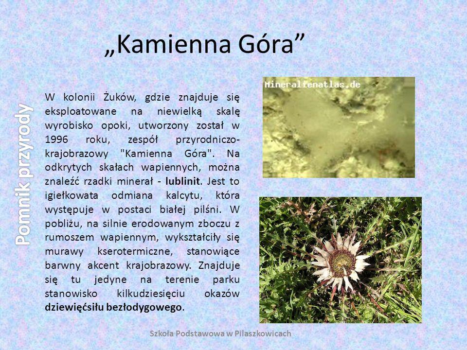 Kamienna Góra W kolonii Żuków, gdzie znajduje się eksploatowane na niewielką skalę wyrobisko opoki, utworzony został w 1996 roku, zespół przyrodniczo-